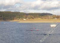 winterweihnachtsschwimmen_02